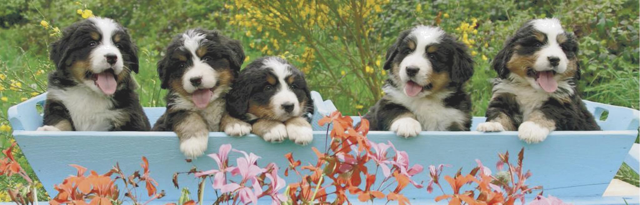 Pups_website